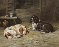 Two spaniels in a barn
